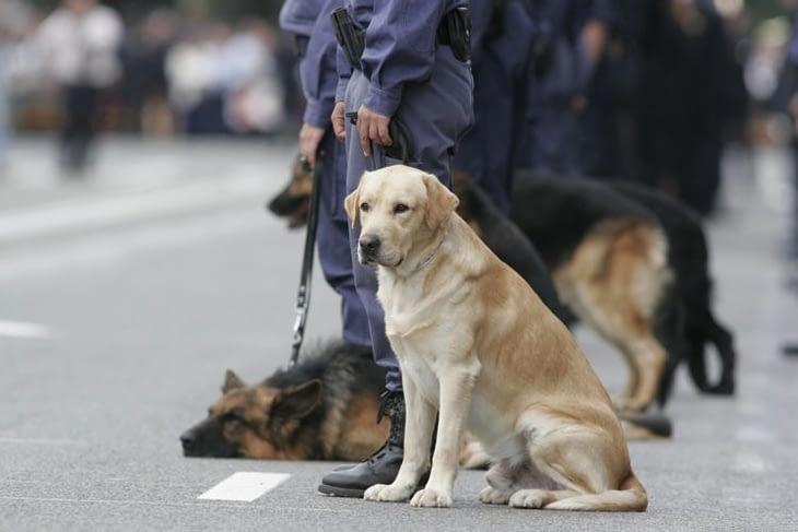 Police K9 Unit